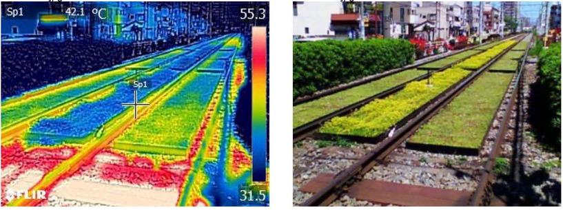 鉄道敷の緑化について
